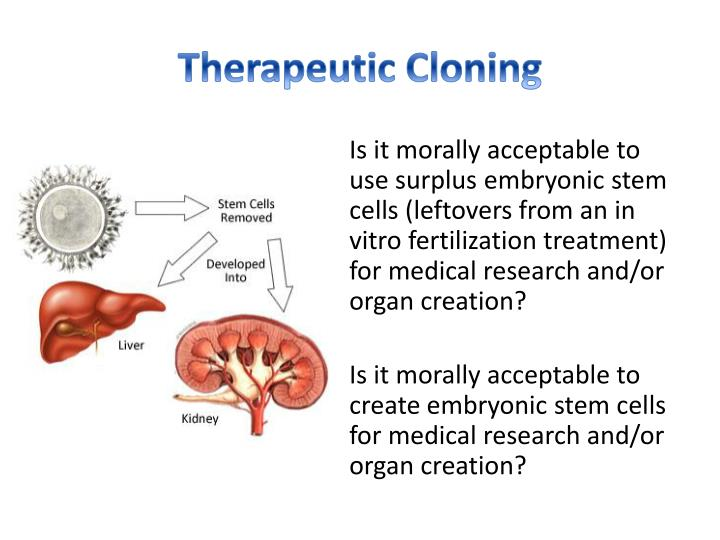 is cloning acceptable Cloning a clone is an exact genetic copy of a living creature scientists clone cells and animals to help understand how diseases, treatments and human cells work  is it acceptable to clone is it acceptable to create embryos and later destroy them, so that sick people can have medicines to help them support us.