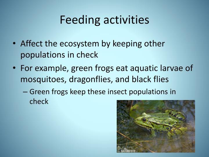 Feeding activities