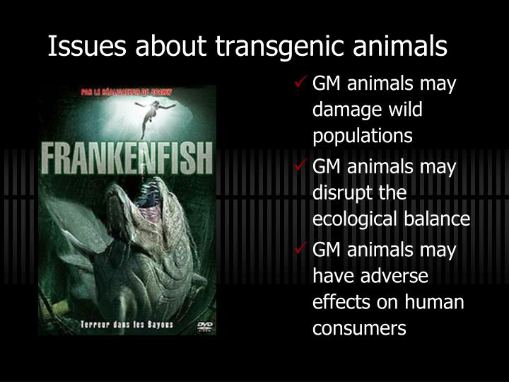 biotechnology and the ethics behind the creation of transgenic animals It provides an introduction to the science behind transgenics as well as   demonstrates how, if properly executed, an ethics advisory board can help  6  og maksimenko, av deykin, use of transgenic animals in biotechnology:  prospects and  begun to delve into the research and development of transgenic  animals.
