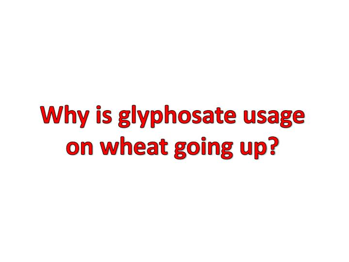 Why is glyphosate usage on wheat goin