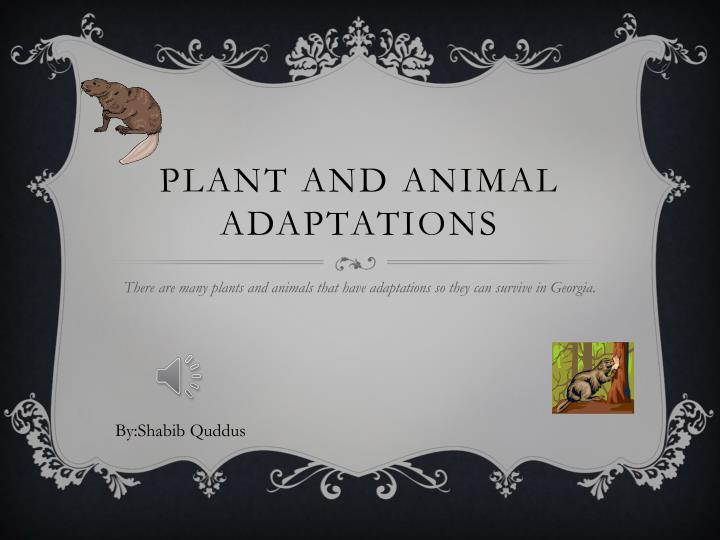 plant and animal adaptations n.
