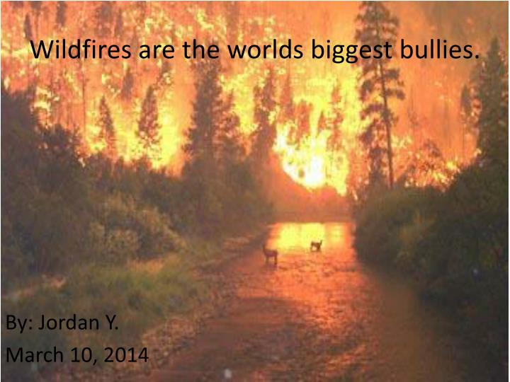wildfires are the worlds biggest bullies n.