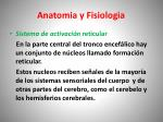 anatomia y fisiologia3