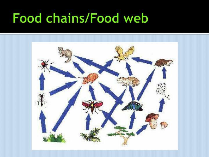 Food chains/Food web