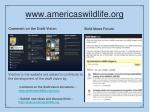 www americaswildlife org1