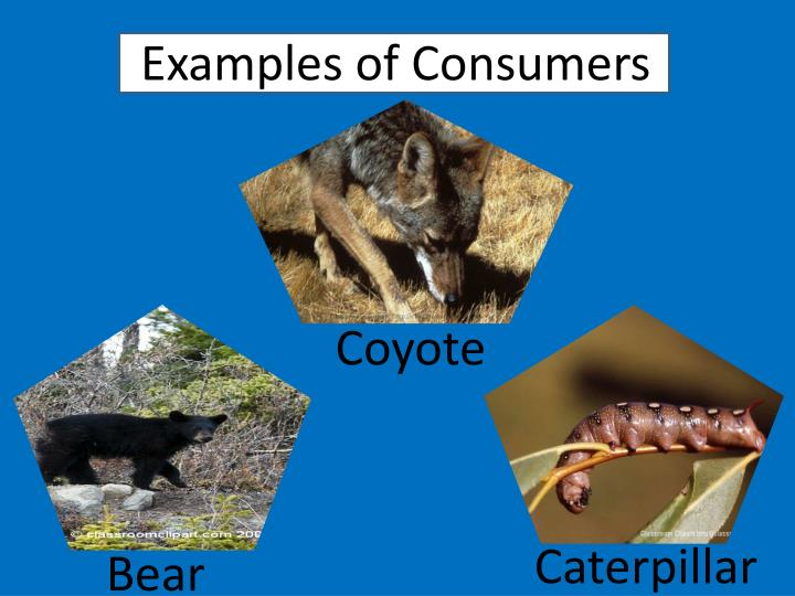Ppt Living Organisms Review And Quiz Powerpoint Presentation Id