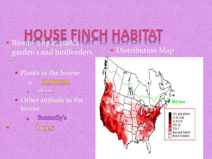 house finch habitat