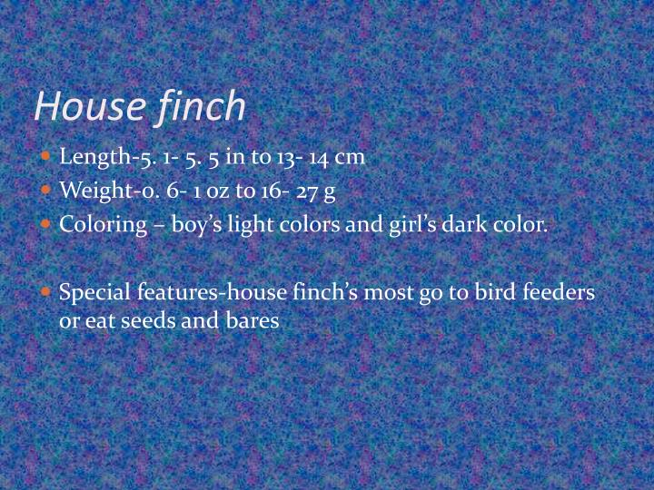 House finch1