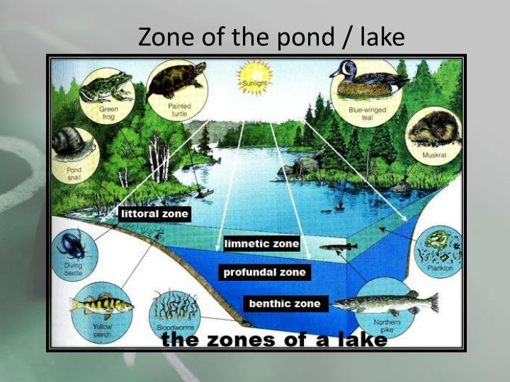 Zone of the pond / lake