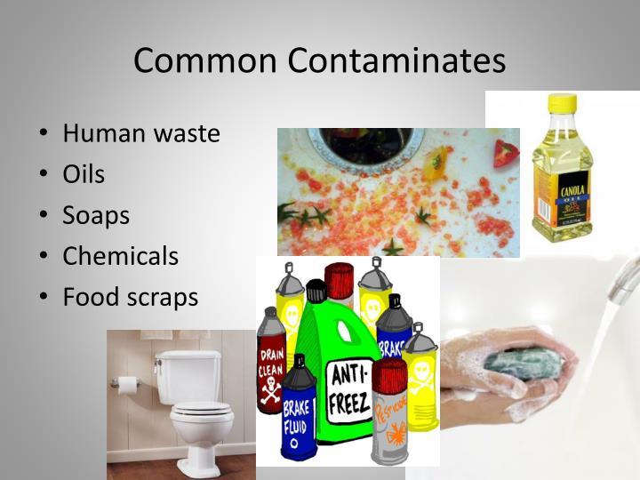 Common Contaminates