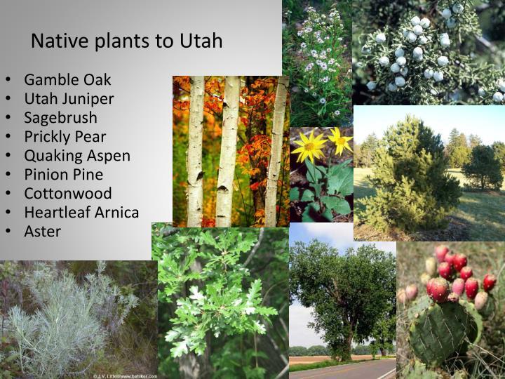 Native plants to Utah