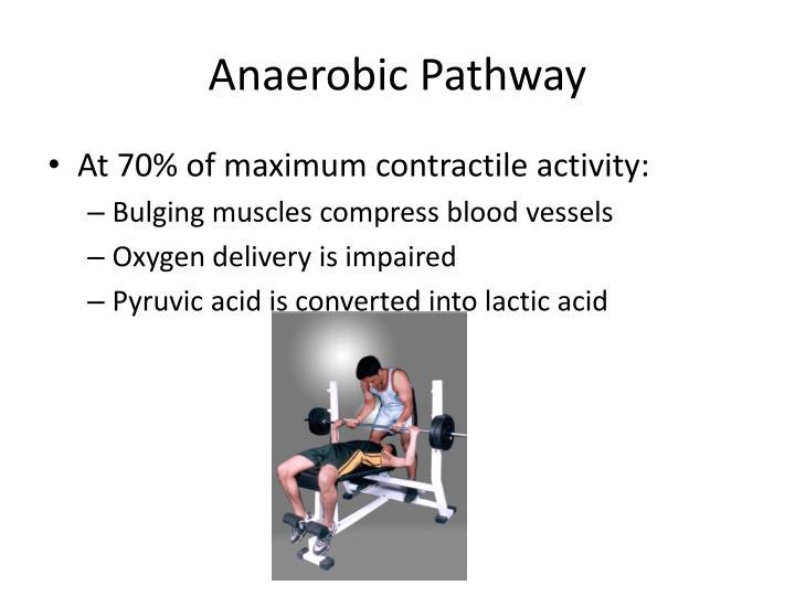 Anaerobic Pathway