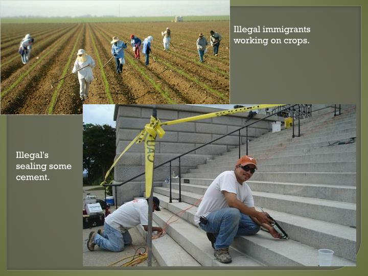 Illegal immigrants working on crops.