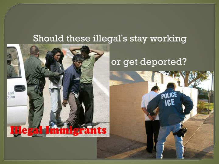 Should these illegal's stay working