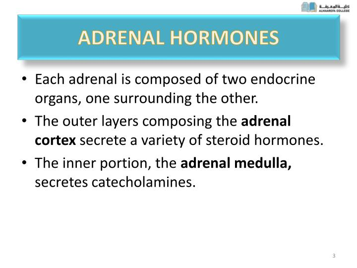 Ppt Adrenocortical Hormone Powerpoint Presentation Id2843434