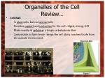 organelles of the cell review