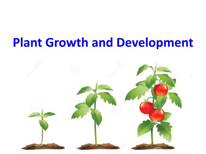 Plant Growth and Development