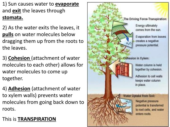 1) Sun causes water to