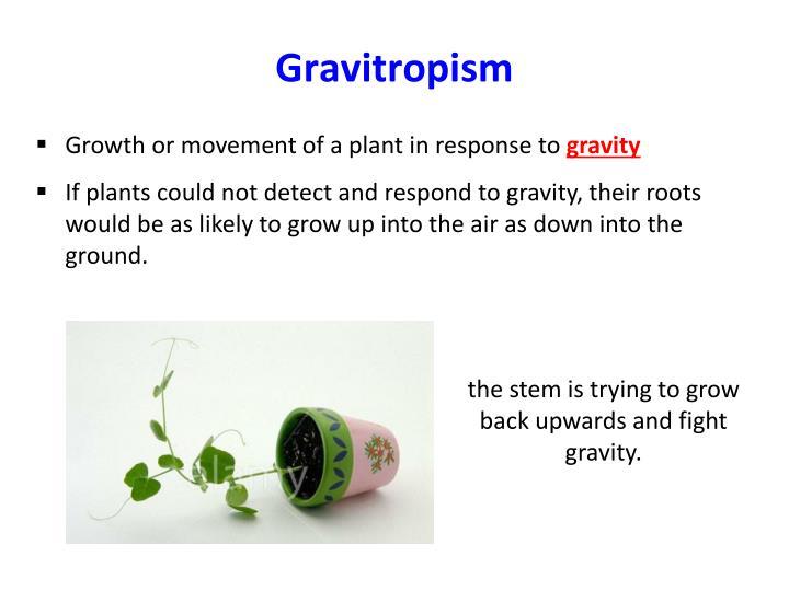 Gravitropism