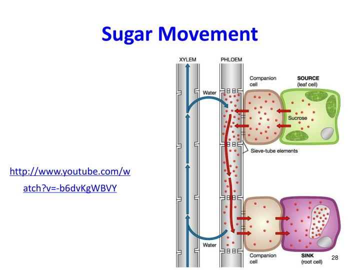 Sugar Movement
