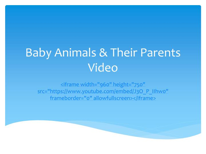 baby animals their parents video n.