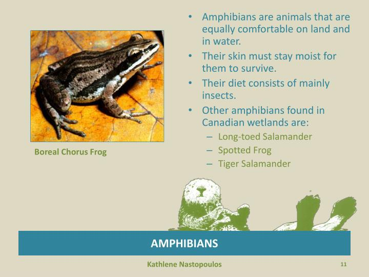 Amphibians are animals that are equally comfortable on land and in water.