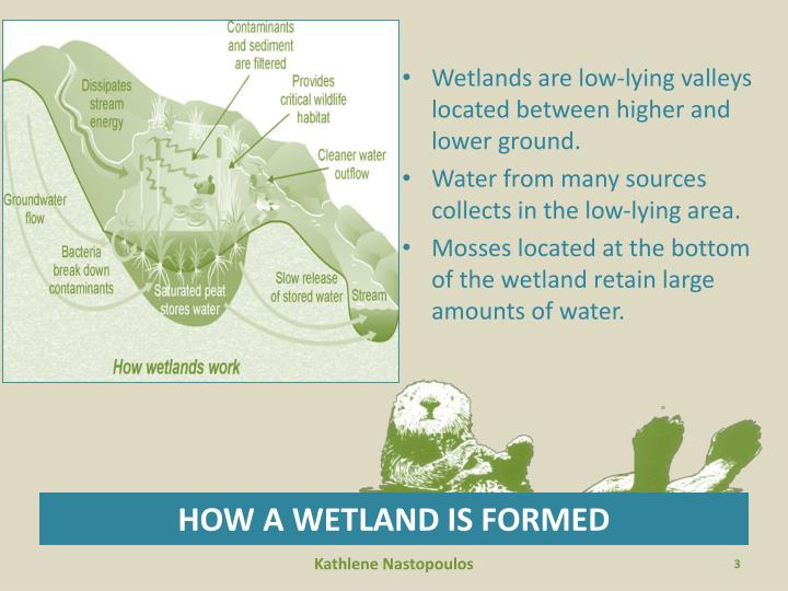 How a wetland is formed