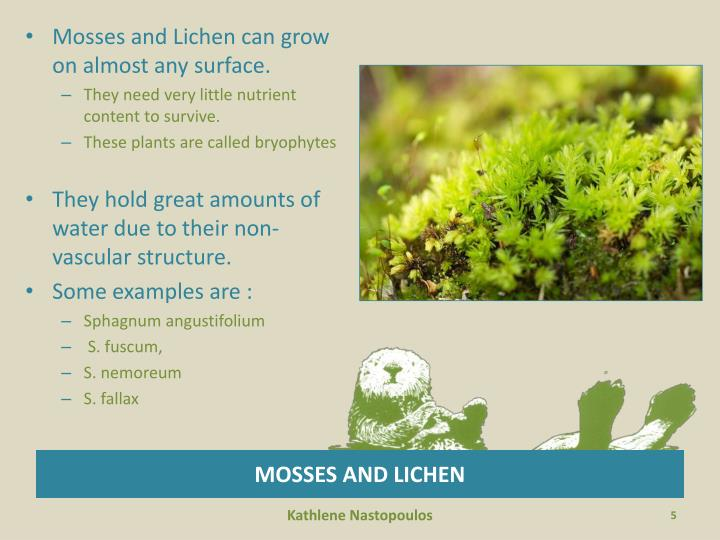 Mosses and Lichen can grow on almost any surface.