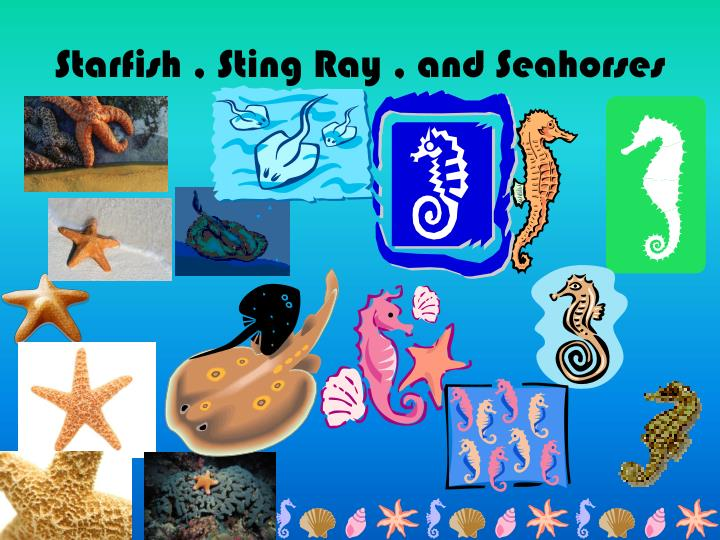 Starfish sting ray and seahorses
