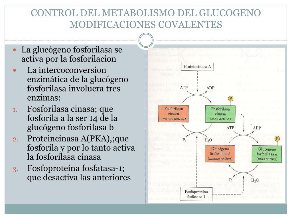 ¿Por dónde empezar con la dieta del metabolismo acelerado opiniones?