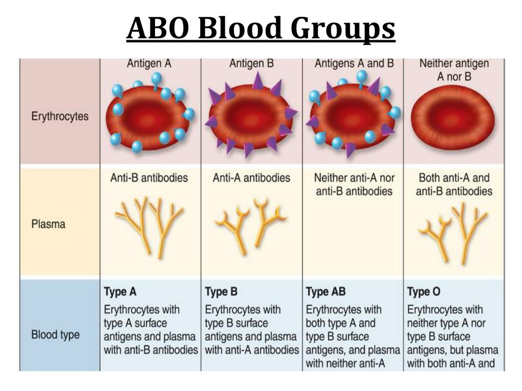 Antibodies ABO