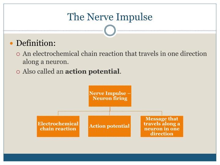 The nerve impulse1