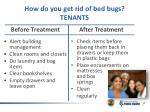 how do you get rid of bed bugs tenants