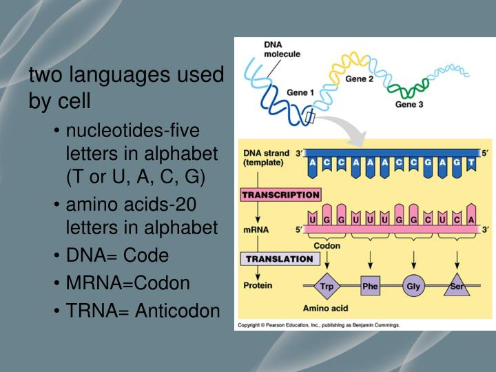 two languages used by cell