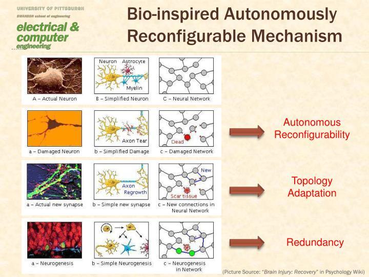 Bio-inspired Autonomously Reconfigurable Mechanism