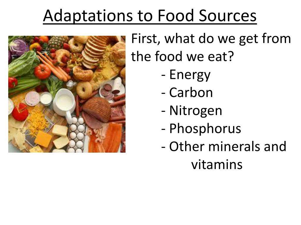 Ppt Adaptations To Food Sources Powerpoint Presentation Id2849130