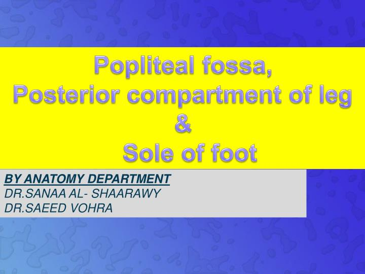 popliteal fossa posterior compartment of leg sole of foot n.