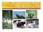 here are some of the animals in india