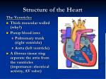 structure of the heart1