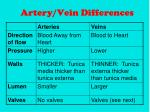 artery vein differences