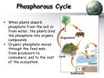 phosphorous cycle3
