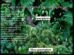 saprophytes and gametophyte