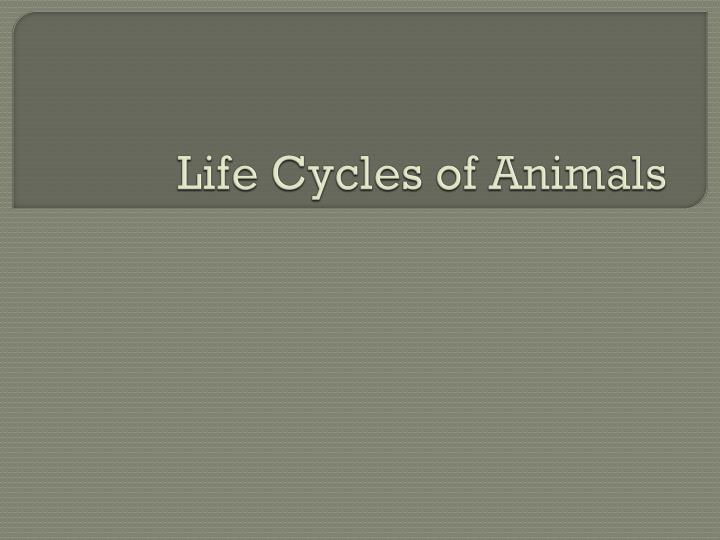 life cycles of animals n.