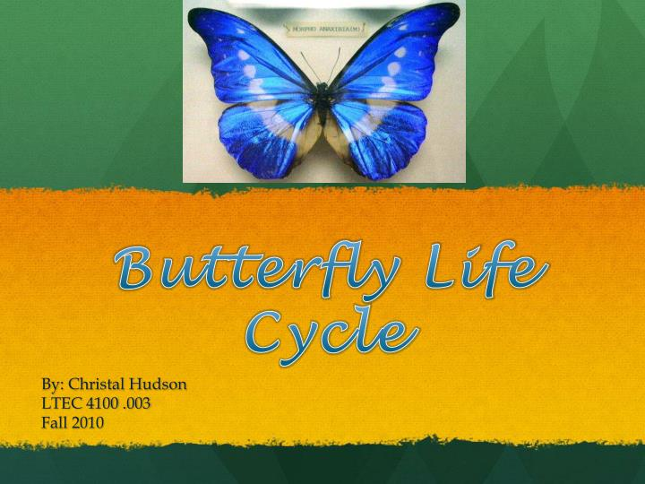 butterfly life cycle n.