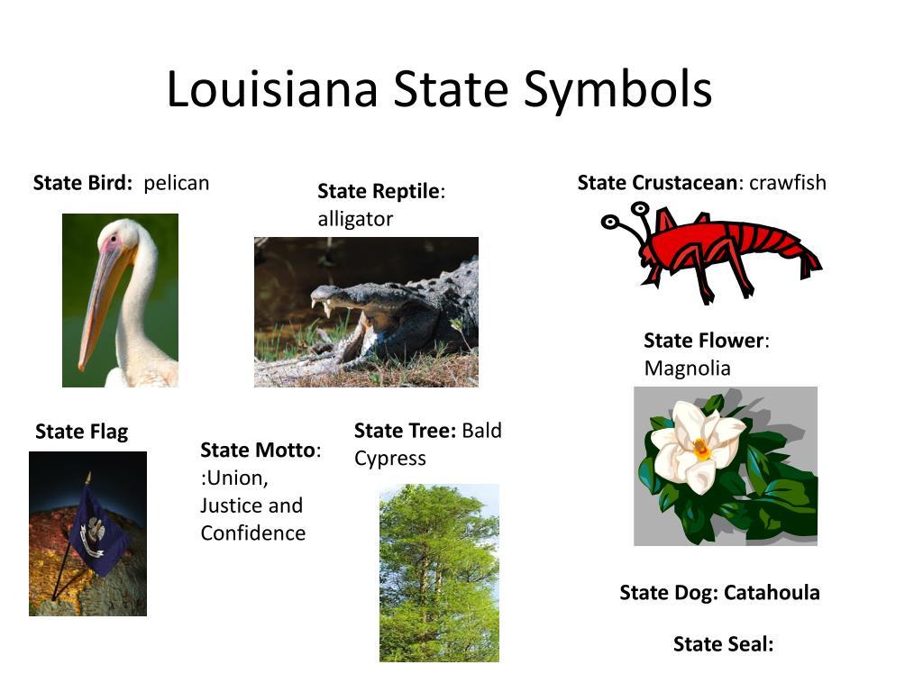 Ppt Louisiana State Symbols Powerpoint Presentation Id2851123