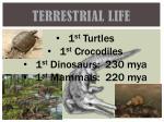 terrestrial life