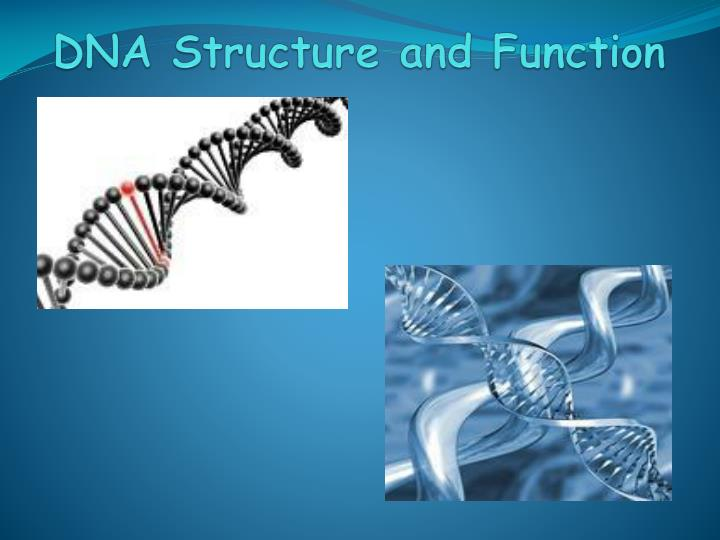 dna structure and function n.