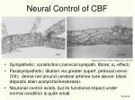 neural control of cbf