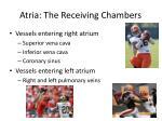 atria the receiving chambers