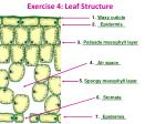 exercise 4 leaf structure